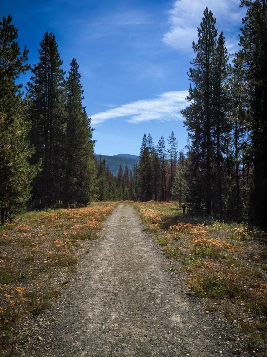 The trail to Huckleberry Hot Springs in Grand Teton National Park